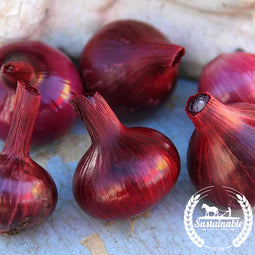 Organic Red Cipollini Onion Seeds