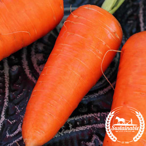 Organic Red Cored Chantenay Carrot Seeds