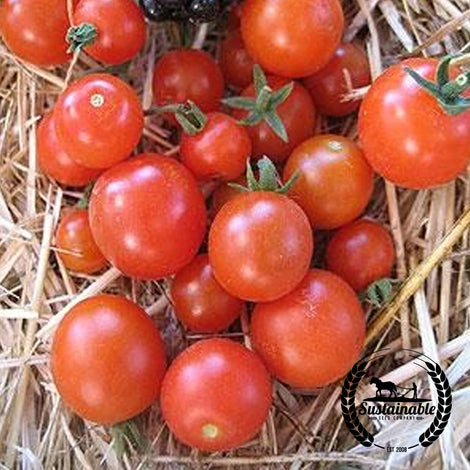Red Currant Tomato Seeds - Non-GMO