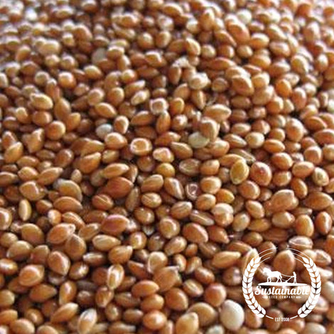Red Proso Millet Seeds - Non-GMO