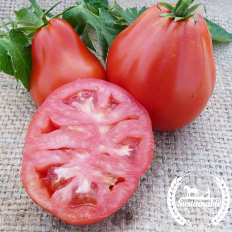 Red Truffle Tomato Seeds - Non-GMO
