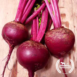 Ruby Queen Beet Seeds - Non-GMO
