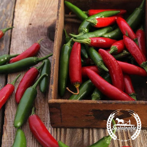 Serrano Hot Pepper Seeds - Non-GMO