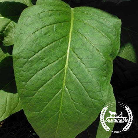 Silk Leaf Tobacco Seeds - Non-GMO