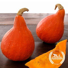 Organic Japanese Red Kuri Squash Seeds