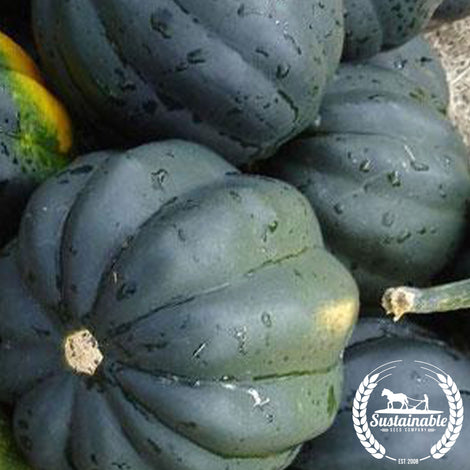 Organic Table King Bush Acorn Squash Seeds