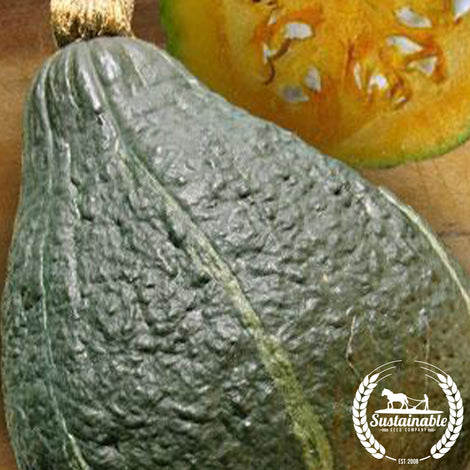 True Green Improved Hubbard Squash Seeds - Non-GMO