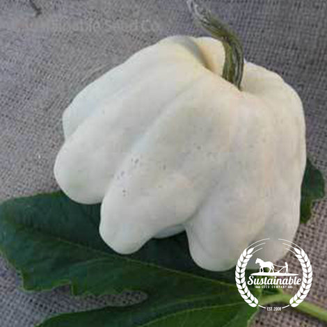 Yugoslavian Finger Squash Vegetable Seeds - Non-GMO