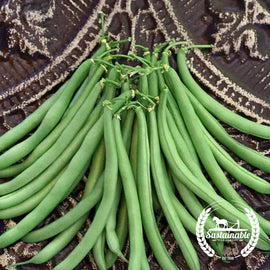 Strike Bush Bean Garden Seeds