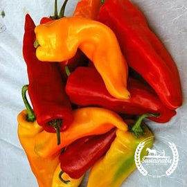 Organic Sweet Sunset Italian Pepper Mix Seeds