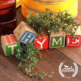 Organic Thyme Herb Seeds