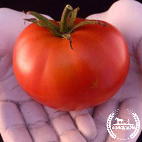 Organic Burbank Red Tomato Seeds - Non-GMO