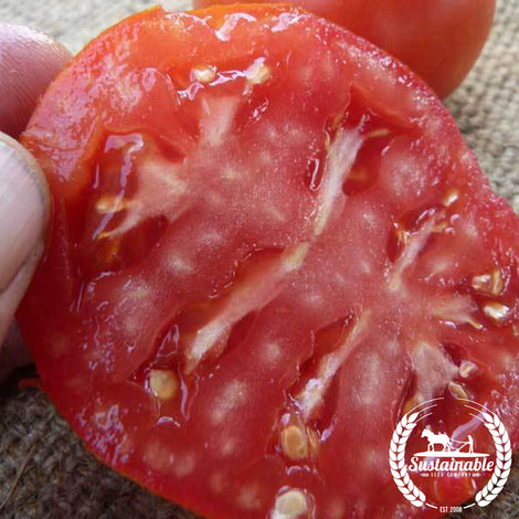 Organic Burbank Slicing Tomato Seeds