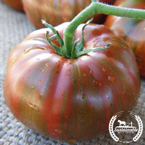 Organic Chocolate Stripes Tomato Seeds
