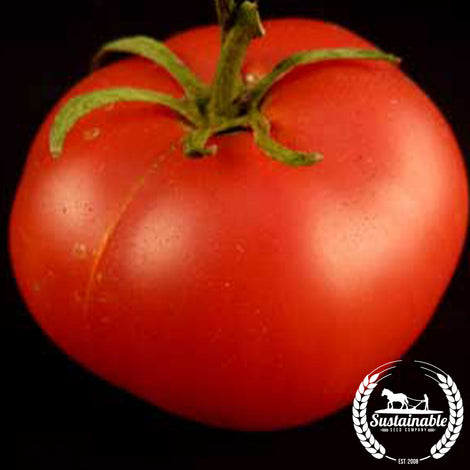 Organic Hanky Red Tomato Seeds