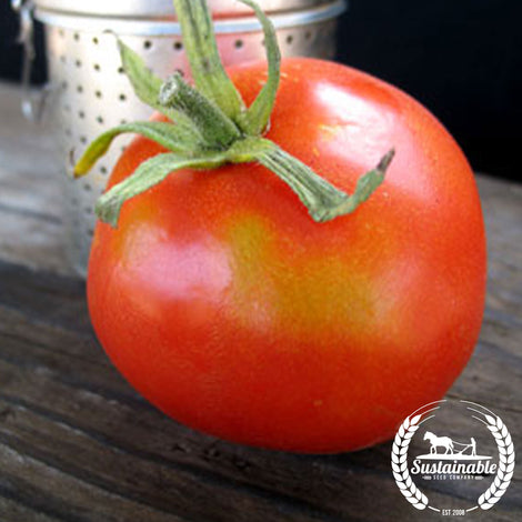 Organic Pearson's Improved Tomato Seeds