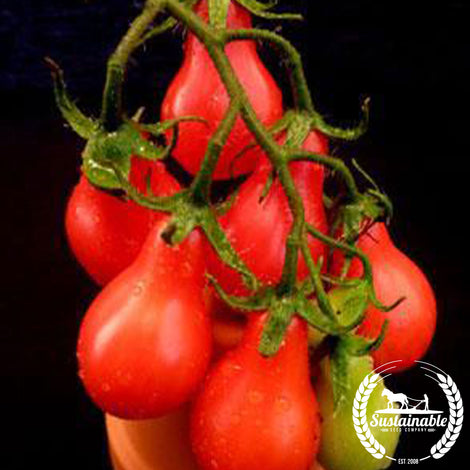 Red Pear Tomato Seeds - Non-GMO