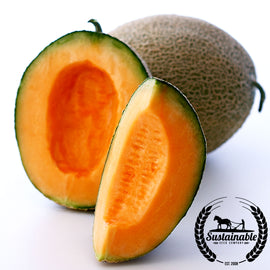 Top Mark Melon Seeds - Non-GMO