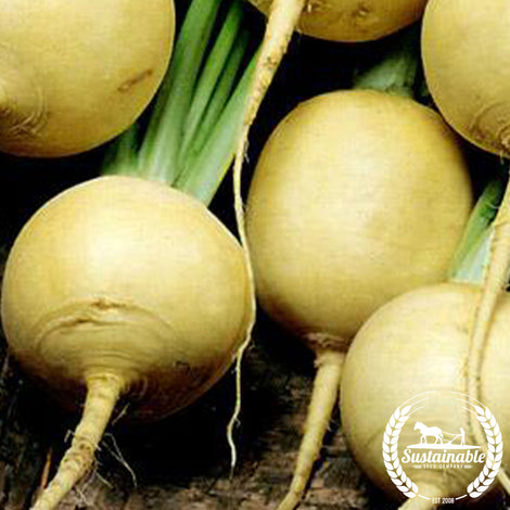 Gold Ball Turnip Seeds