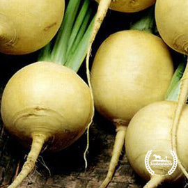 Organic Golden Globe Turnip Seeds