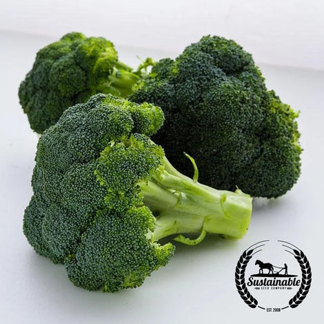 Waltham 29 Broccoli Seeds - Non-GMO