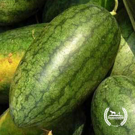 Congo Watermelon Seeds