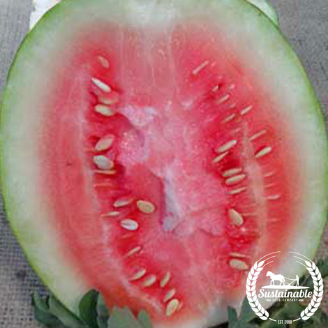 Organic Dixie Queen Watermelon Seeds
