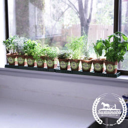 Herb Windowsill Garden Kit
