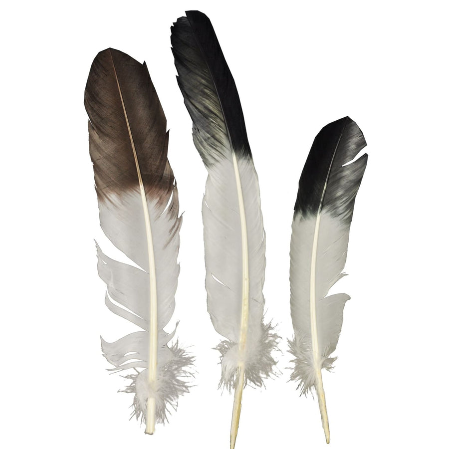 Eagle Tip Feather - Halloween costumes Wild West & Cowboy Costume