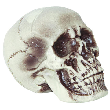 Realistic Skull 7 In - Decorations & Props Halloween costumes haunted house