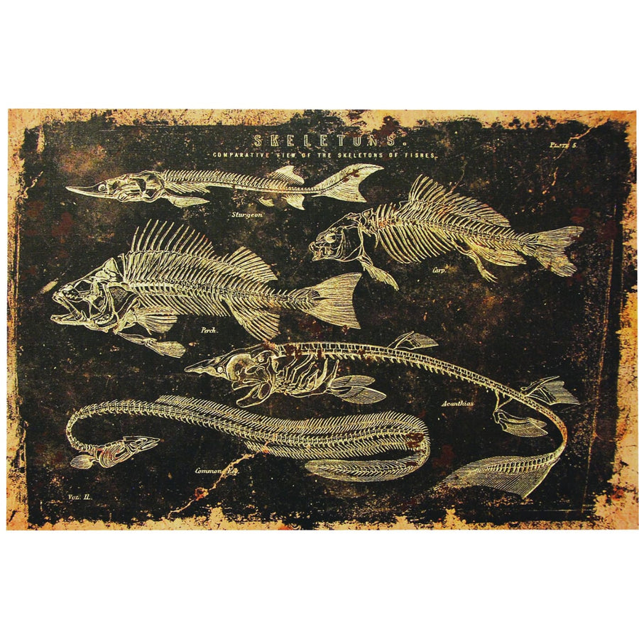 Skeleton Fish Canvas No Frame - Halloween costumes