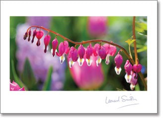 Blank - Pink Dicentra Flowers