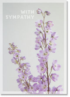 Sympathy : Light pink Delphinium (order in 6)