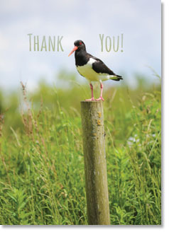 Thank You :  Oystercatcher on post (order in 6)