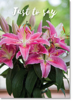 Just to Say: Stargazer Lilies