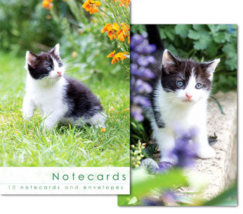 Notecards: Black and White Kitten