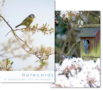 Notecards: Little Birds