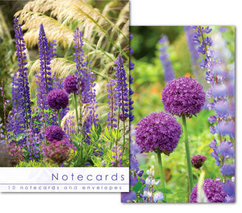 Notecards: Alium Heads