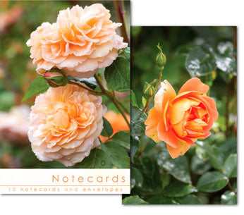 Notecards: Rose Blooms