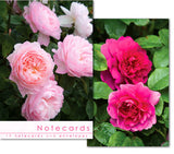 Notecards: Rich Pink roses