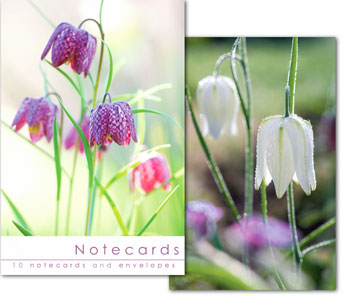 Notecards: Fritillaries  (No Scripture)