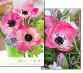 Notecards: Pink Anemone Close Up