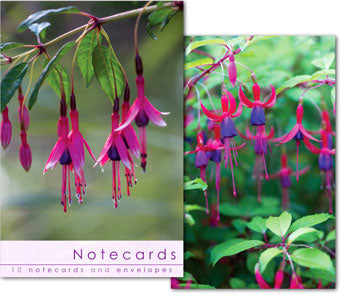 Notecards: Fuschia Close Ups