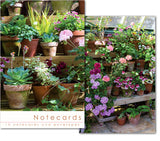 Notecards: Pot plants in conservatory