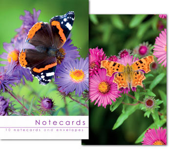 Notecards: Red Admiral and Comma