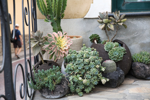 Photo of potted plants found on the streets of Positano, Italy. The plants are encased in vases that look like natural rocks.