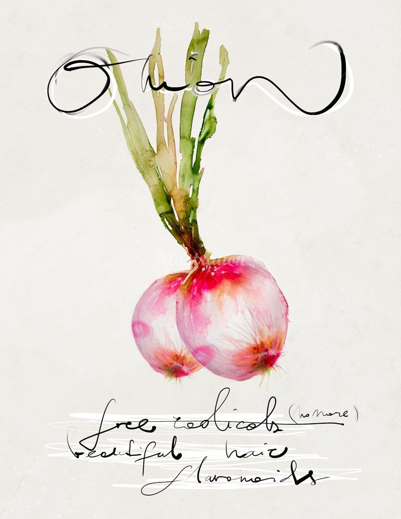 Watercolor illustration, watercolor painting veggies onion food illustration by Marta Spendowska