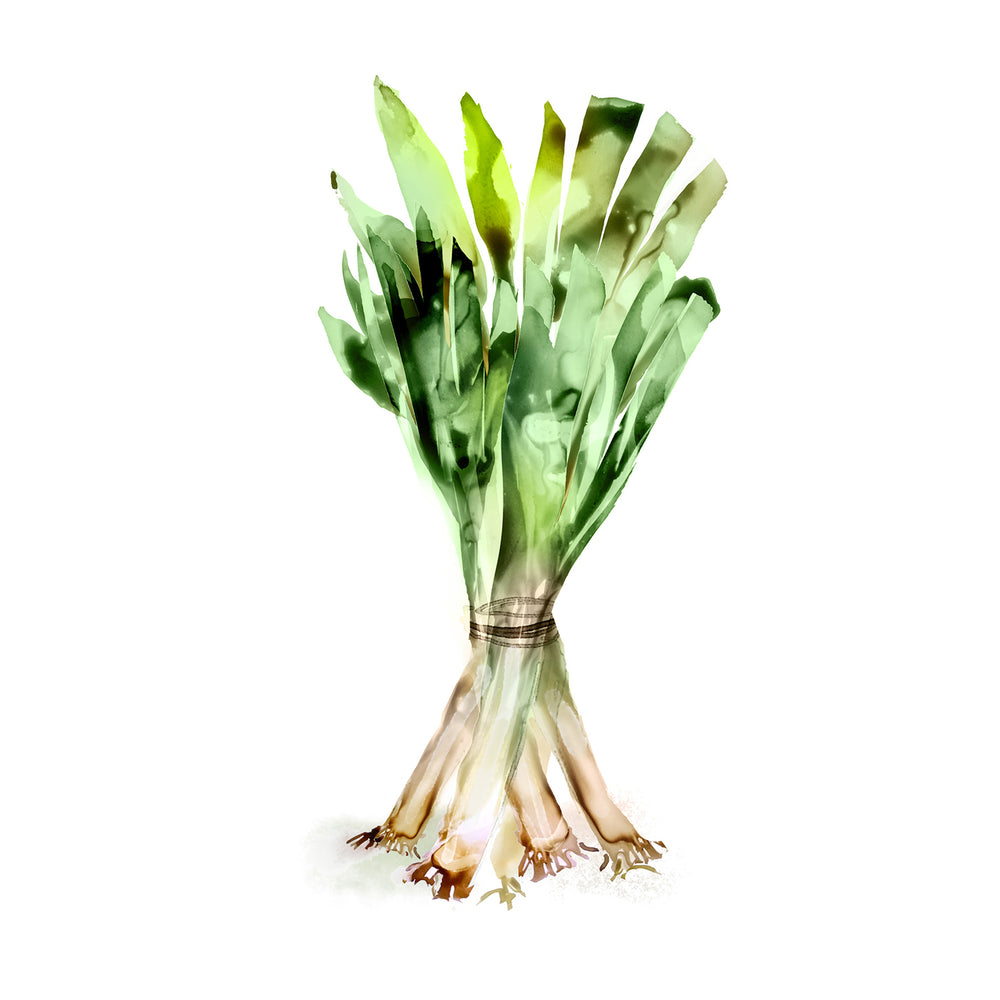 Watercolor illustration, watercolor painting veggies leeks food illustration by Marta Spendowska