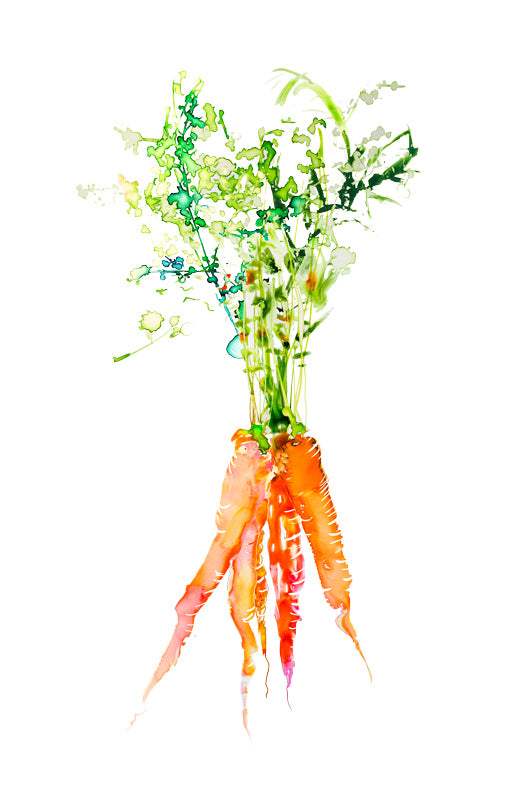 Watercolor illustration, watercolor painting veggies carrot food illustration by Marta Spendowska