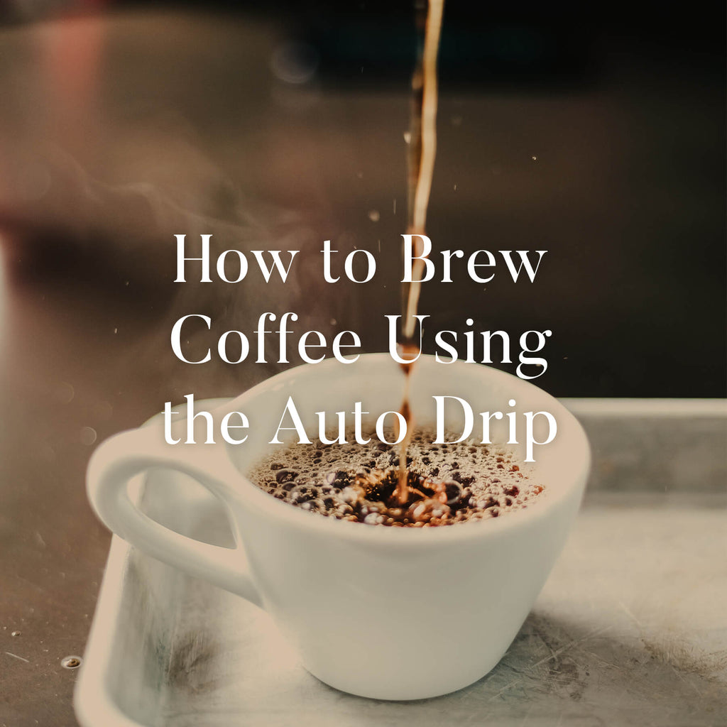 Chicago French Press How To Brew Auto Drip